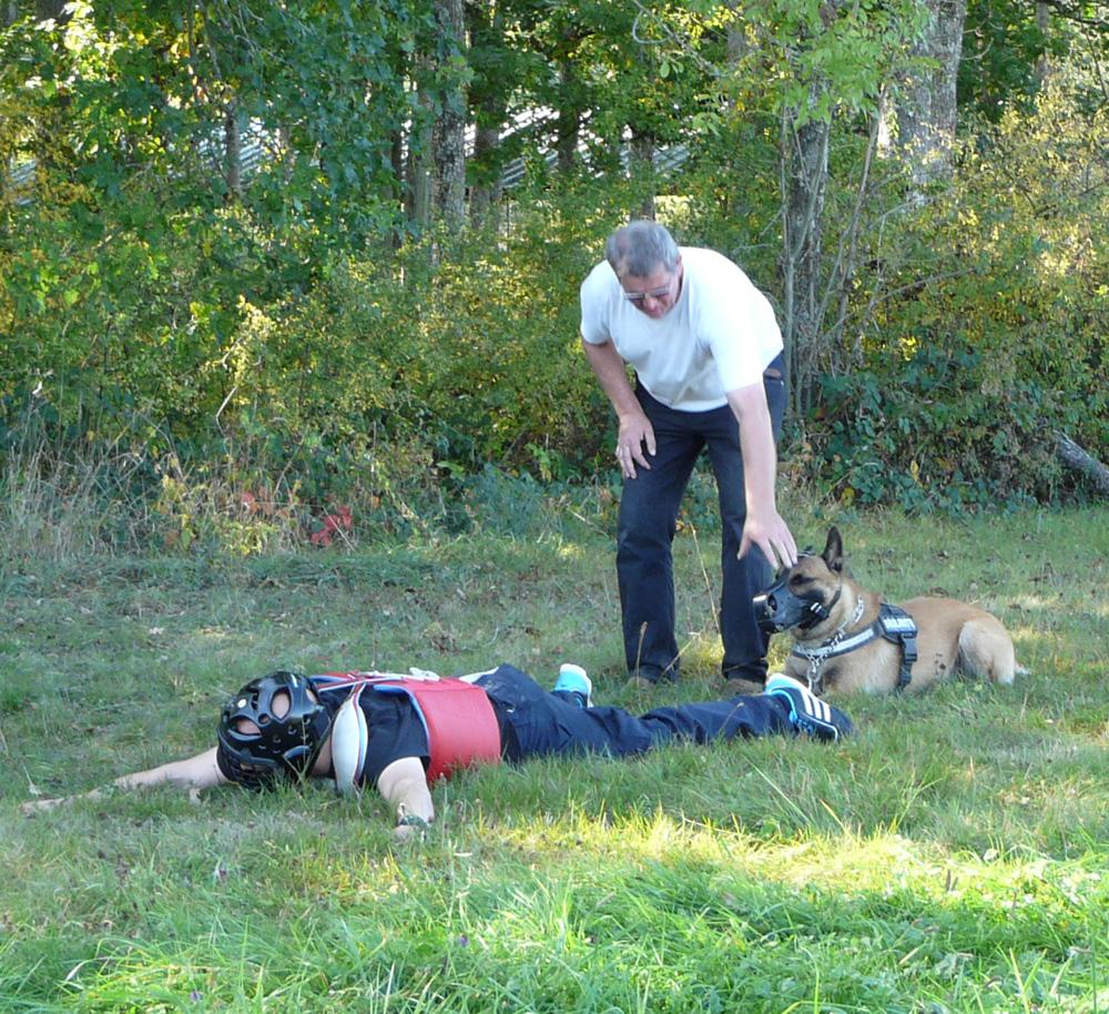 Formation chiens police vosges